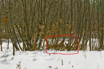 Deer_hiding_1