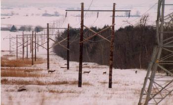 Deer_hydro_lines